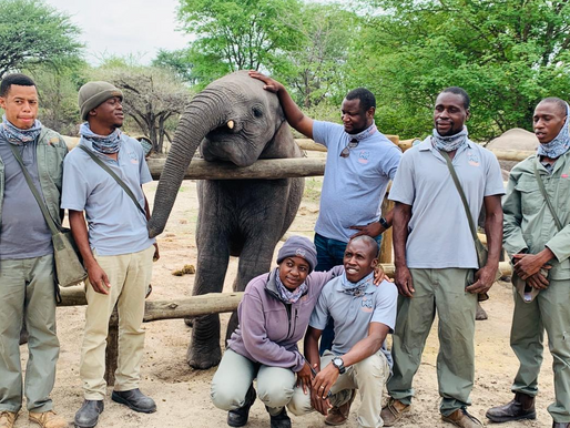 Elephant Havens – Preserving and Protecting the African elephant