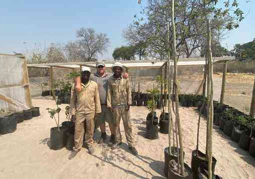 Wilderness Safaris Drives Reforestation Project In Linyanti Wildlife Reserve