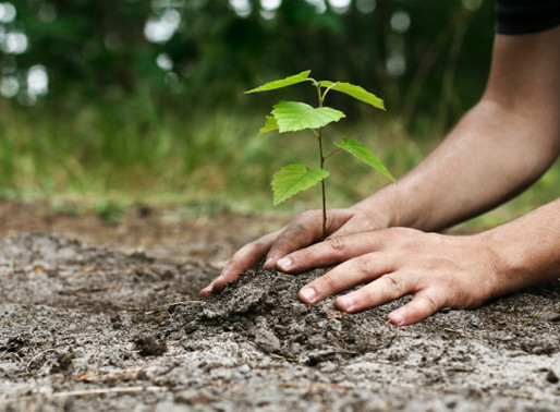 Planting Trees Against Climate Change