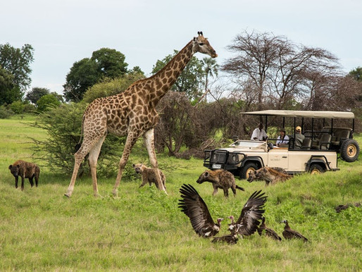 All-rounder 'Action' speaks on creating a combination Safari in Botswana