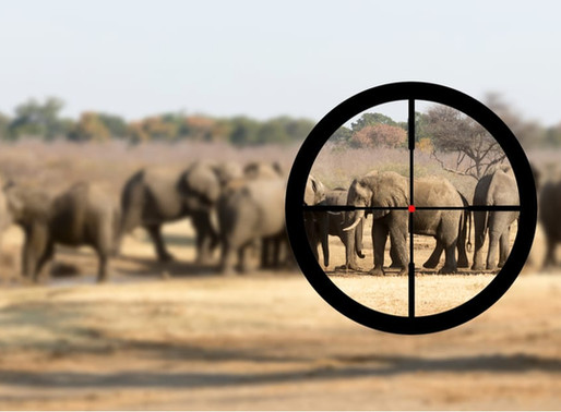 Banning trophy hunting can put wildlife at risk: a case study from Botswana