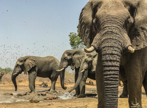 Africa's conservationand trophy hunting dilemma