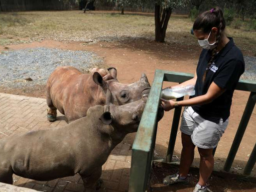 South Africans Volunteer To Keep Rhino Orphanage Going During Lockdown