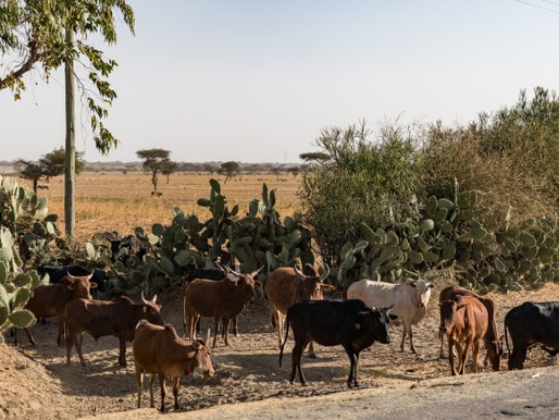 New targets to protect biodiversity must include farmers and agriculture