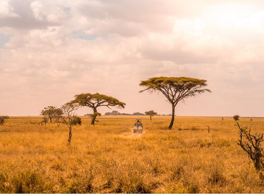 Top 10 countries in Africa that offer the best safari experience?