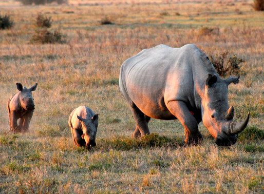 Khama Rhino Sanctuary – Conservation and Tourism
