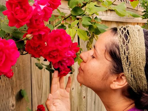 Rose Heart Medicine