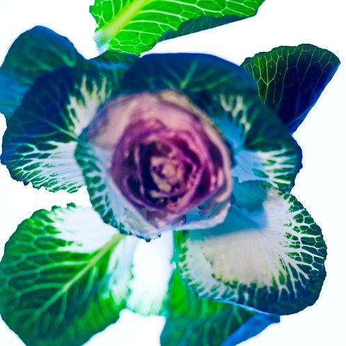 Fleurs D'Obscure
