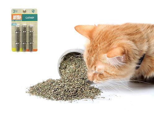 Catnip para gato