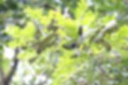 IMG_0265_edited.jpg