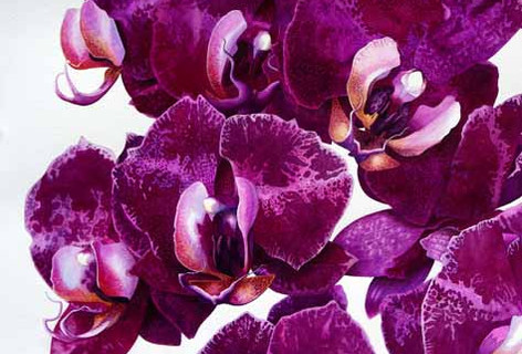IM.moth-orchids.jpg