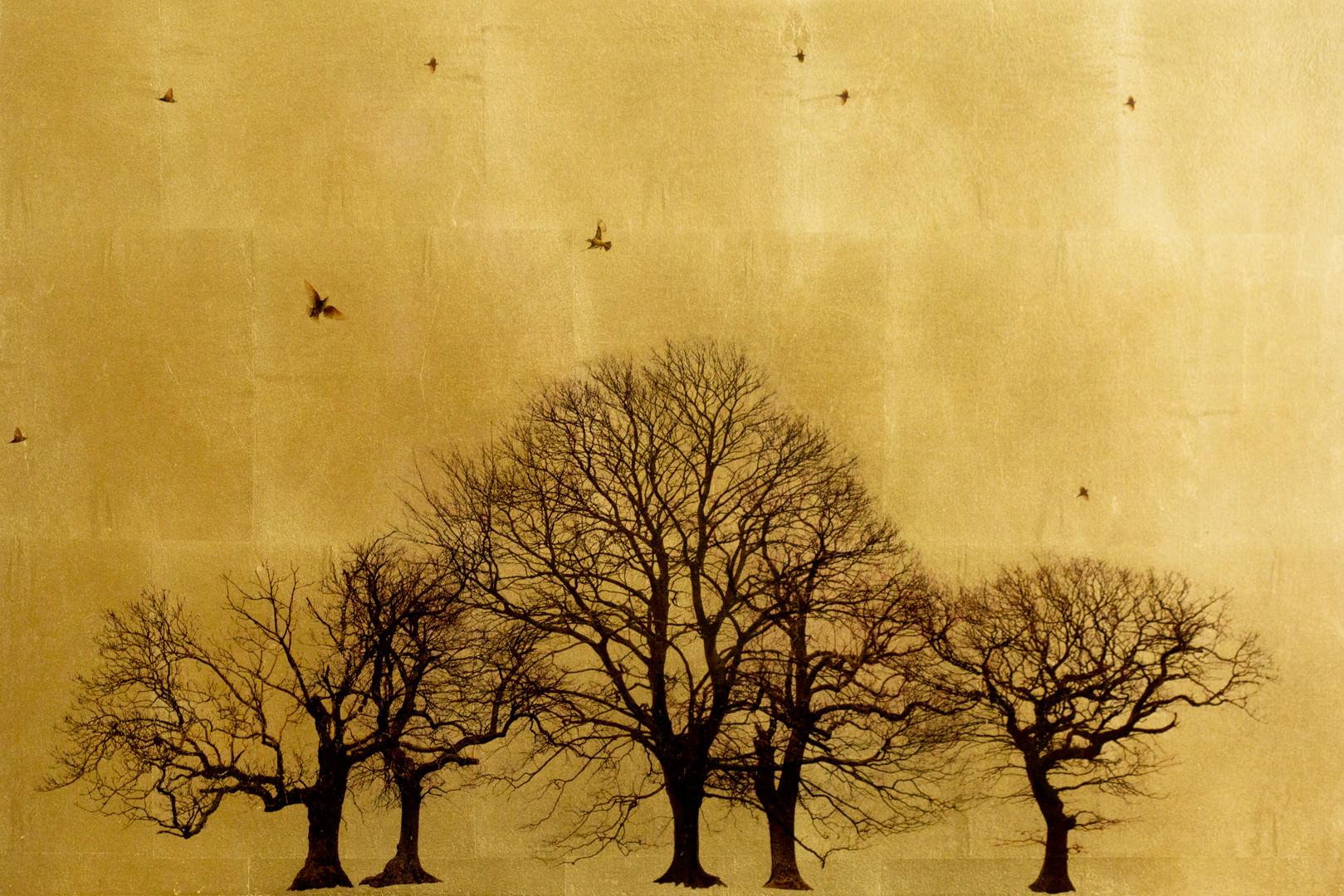 'Winter_Arboretum_In_Excelsis'_Gold_Leaf