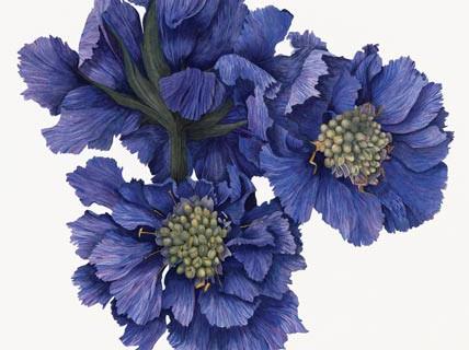 IM.blue-pincushion.jpg
