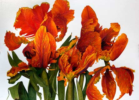 IM.Tulips-100115.jpg
