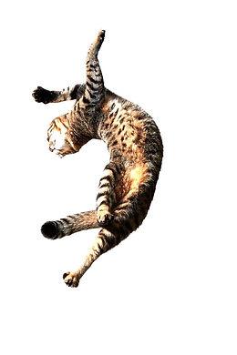 gato%20amelia_edited.jpg