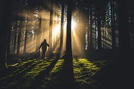 forest tree light med.jpg