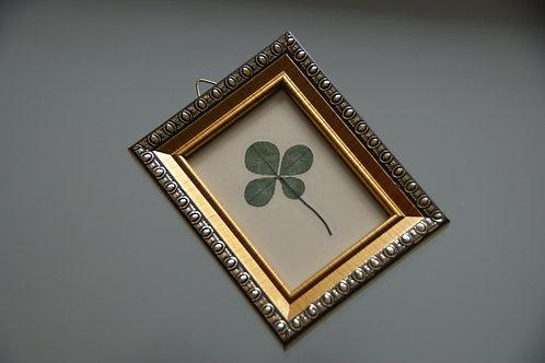 Framed four-leaf clover