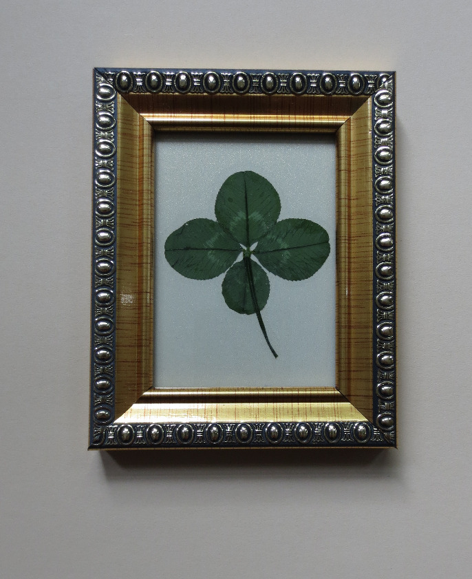 Four-leaf clover in golden frame