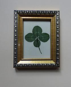 Four-leaf clover in golden frame