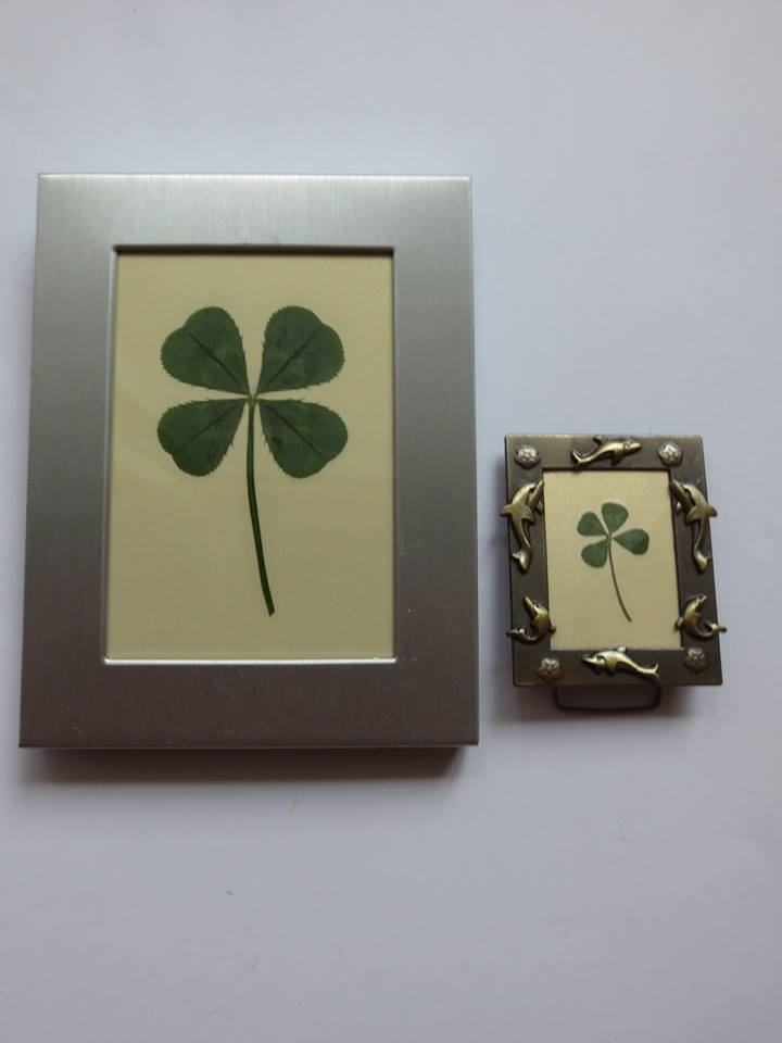 Two framed clovers