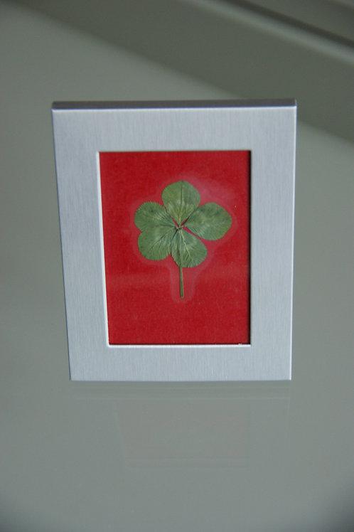 Framed five-leaf clover