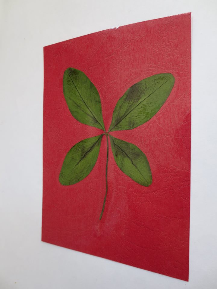 Giant clover on red cardboard