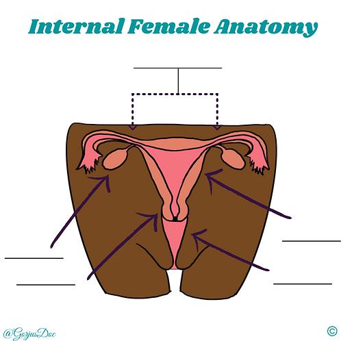 Anatomy Worksheets