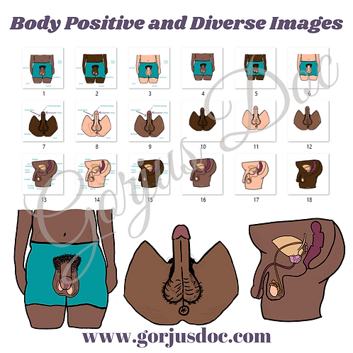 Body Positive and Diverse Natal Male Anatomy BUNDLE