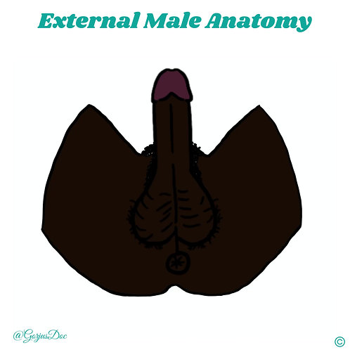 Diverse Male Anatomy