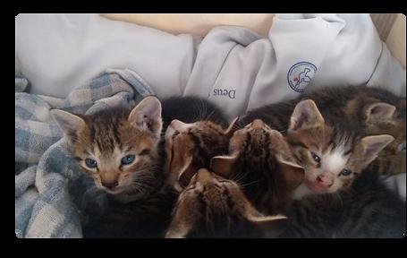 Este lindos gatinhos esperam um lar!