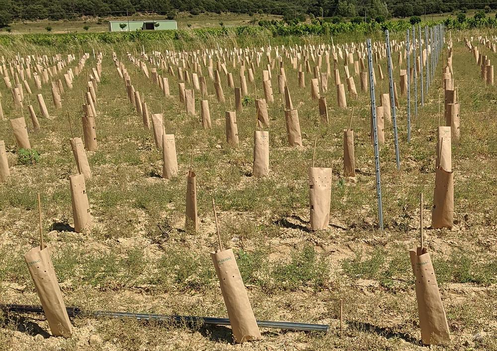 Galvanised steel intermediate posts going into the ground
