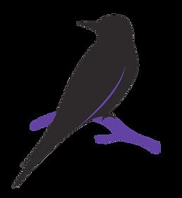 Oiseaux-AOP-Transparent-900.png