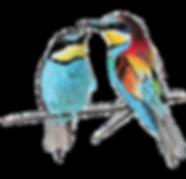 Oiseaux-Amourettes-Transparent-900.png