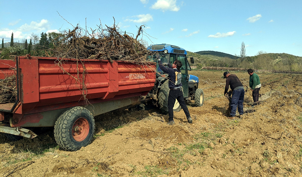 Tossing the vines into the trailer - hard work!!