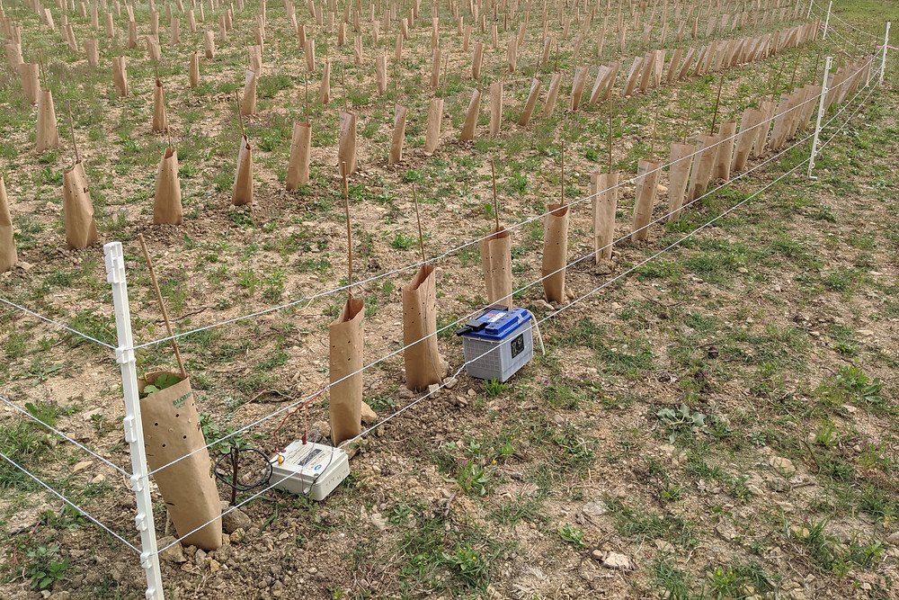 The electric fence used to keep the wild boar out of the new vineyard