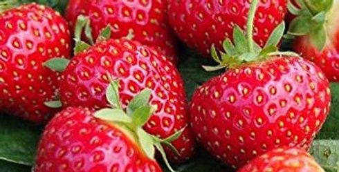 Strawberry 'Honeoye'  AGM