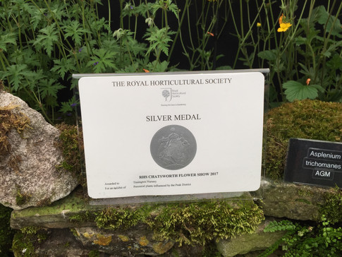 Our First RHS Medal in 2017