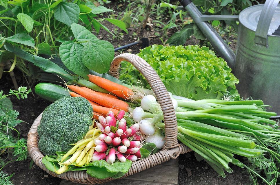 backyard-vegetable-garden-1525293686.jpg