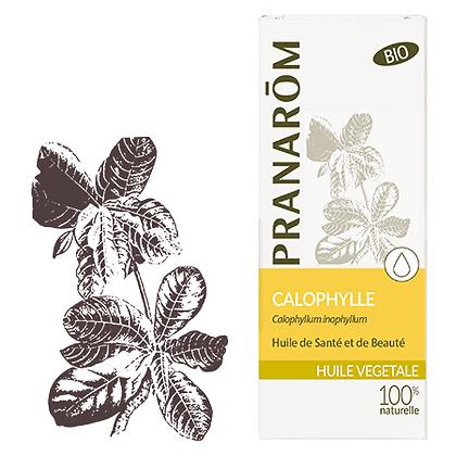 Huile végétale bio Calophylle 50ml