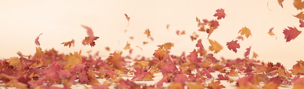 fall_Autumn.png