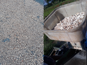 Uso da mandioca na alimentação de galinhas caipiras