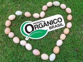 Produção de ovos orgânicos