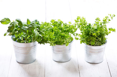 fresh green herbs in pots on a wooden ta