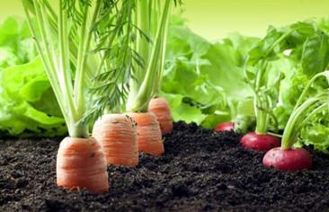 ¡Cultivar tus propias hortalizas ecológicas es posible en la ciudad!