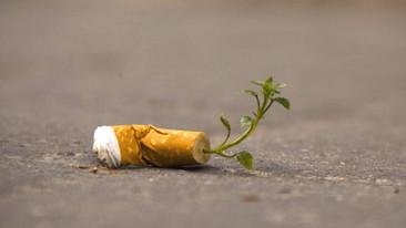 Estos papeles transforman tu adicción al cigarrillo en un bosque