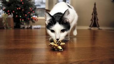 10 consejos para cuidar a tu mascota en estas fiestas decembrinas