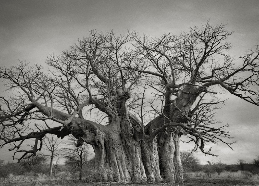 ancient-trees-beth-moon-3-960x623.jpg