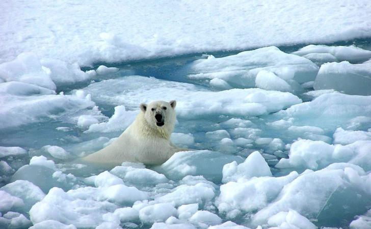 oso-polar-deshielo-artico-2.jpg