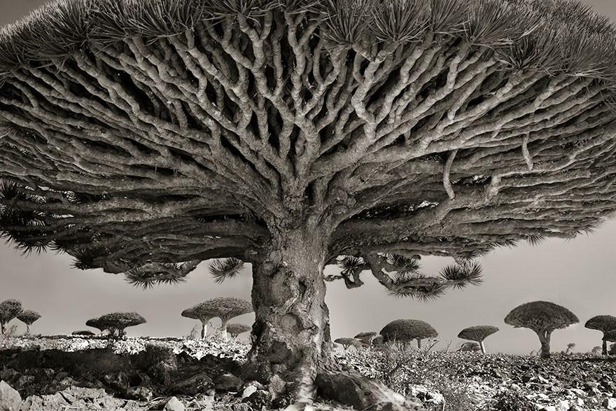 ancient-trees-beth-moon-8-960x623.jpg