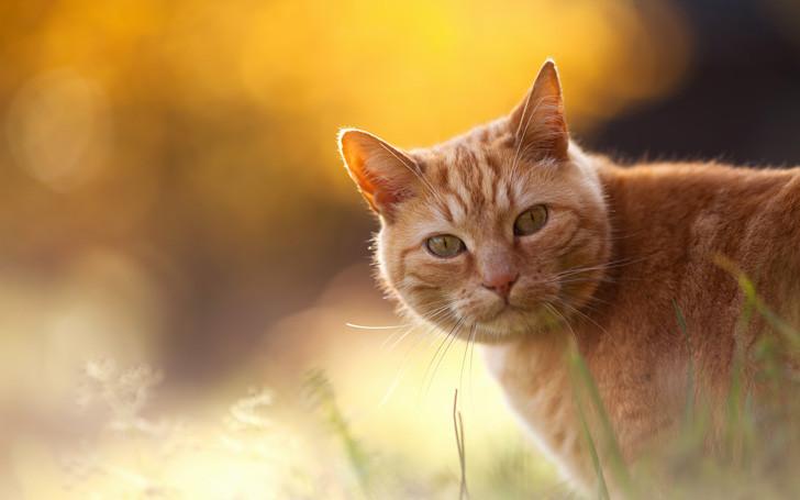 Animals___Cats_Red_Cat_on_an_orange_background_044688_.jpg